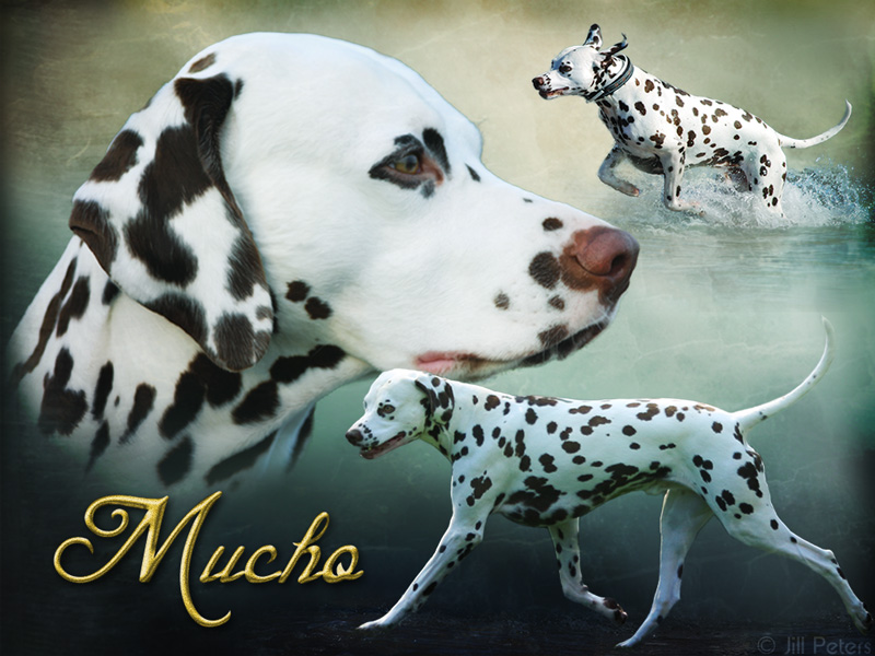 True Soul Besame Mucho